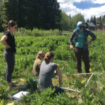 Field ecologists from the Rocky Mountain Biological Station collecting data
