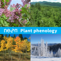 Collage of plant phenology