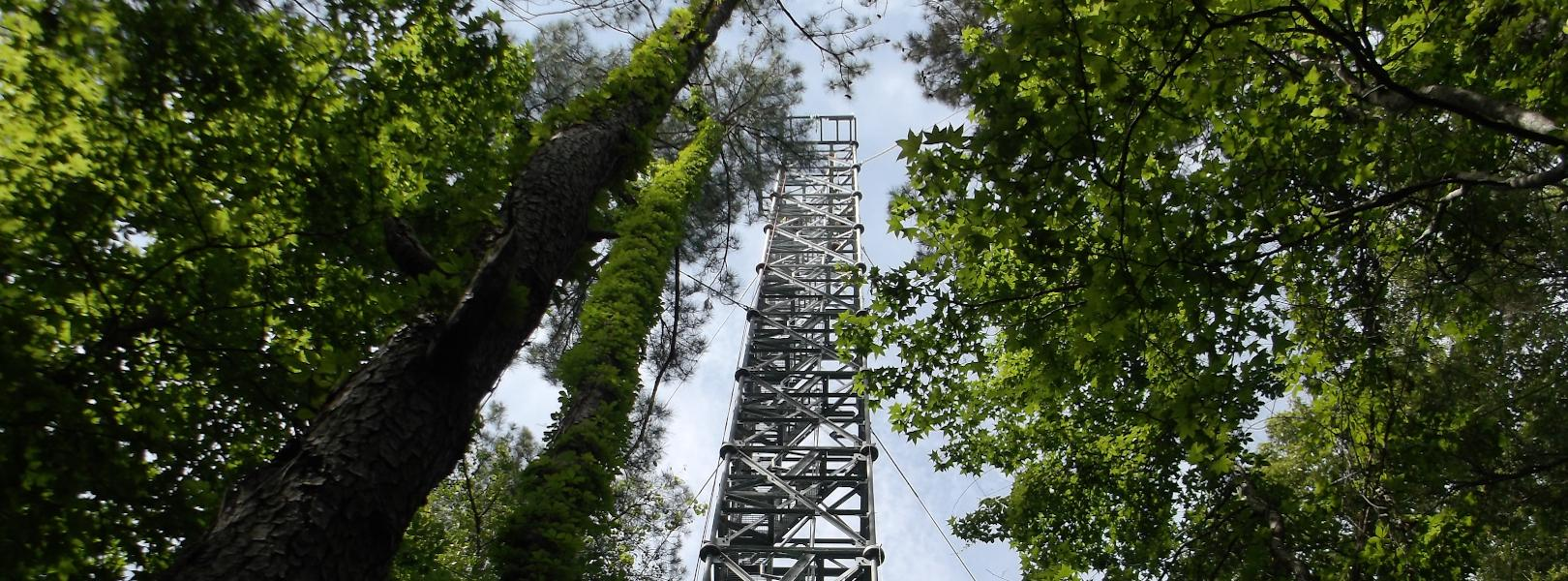 LENO tower from bottom looking toward top of forest canopy