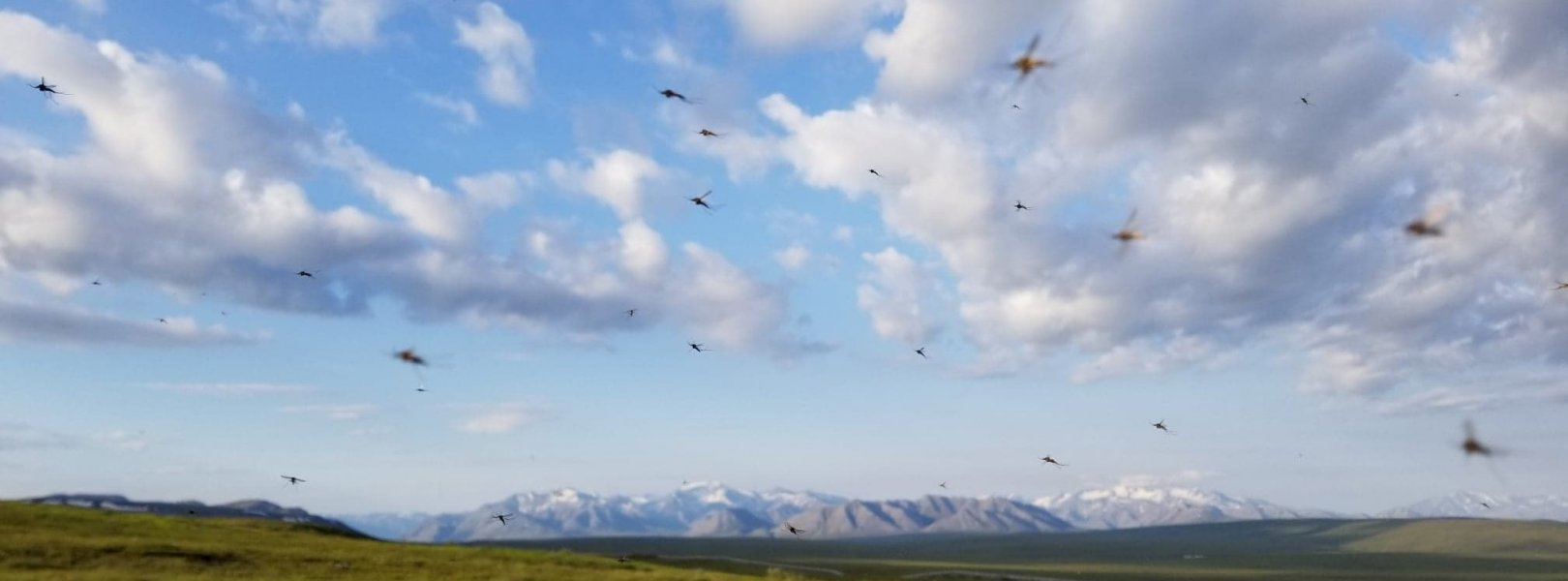 Mosquitos flying in a field with mountains in the background