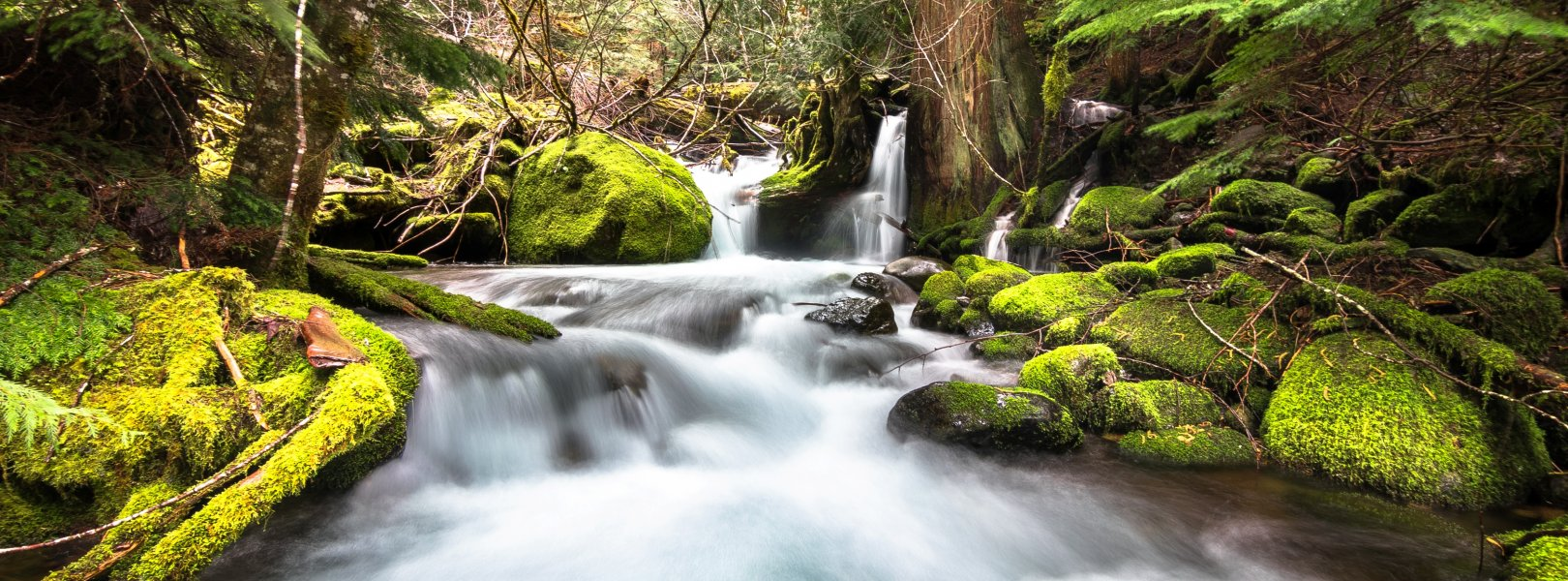 McRae Creek flows through the lush and mossy HJ Andrews Experimental Forest in central Oregon.