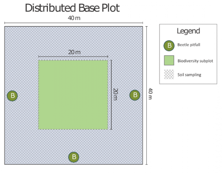 Graphic of ground beetle pitfall trap plot design