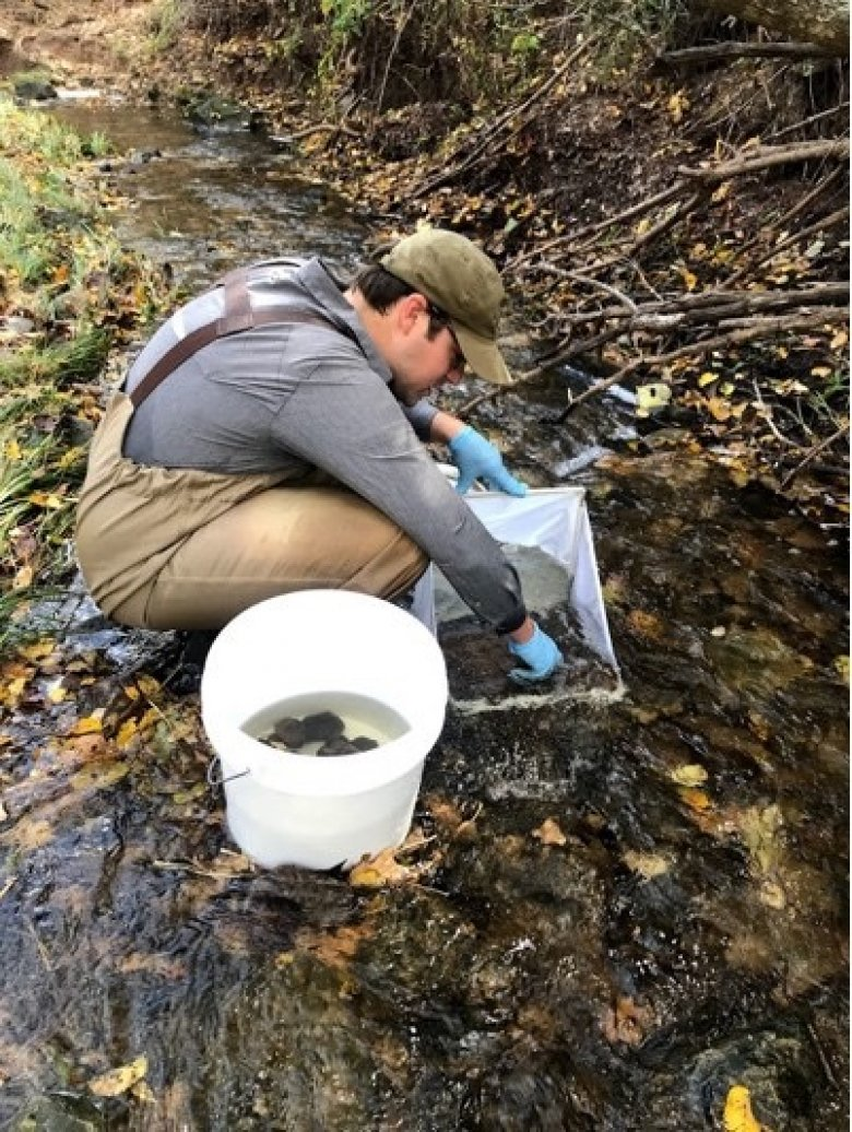 Macroinvertebrate sampling