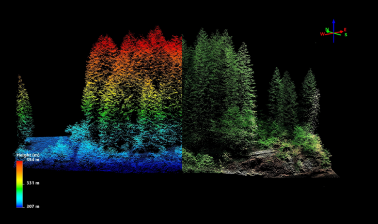 Figure 3 – Sample discrete lidar point cloud of a forest stand at WREF