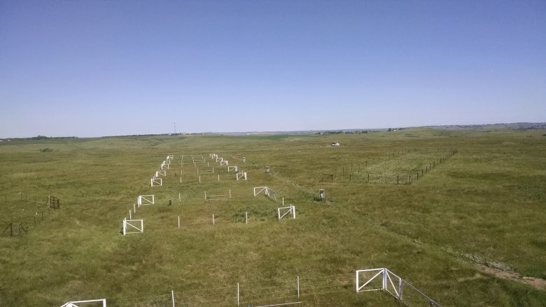 Soil plots at CPER